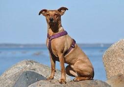 HURTTA CASUAL PADDED Y HARNESS DOG PET 3M REFLECTORS WALKING