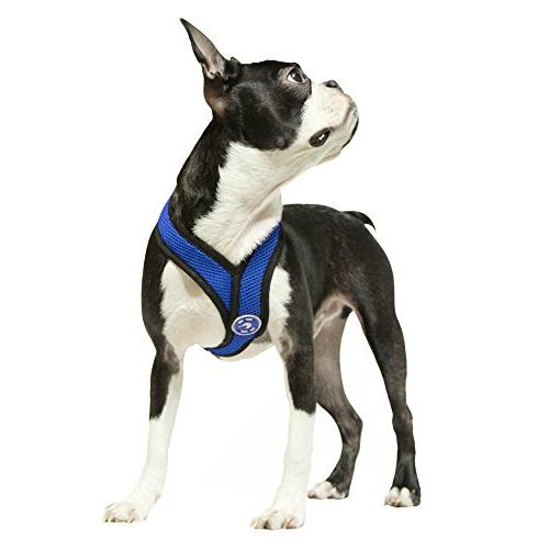 Gooby 04110-BLU-M Comfort Harness Blue Medium Synthetic Trimming Strap