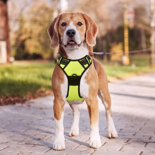 Adjustable Dog Vest Harness Walking