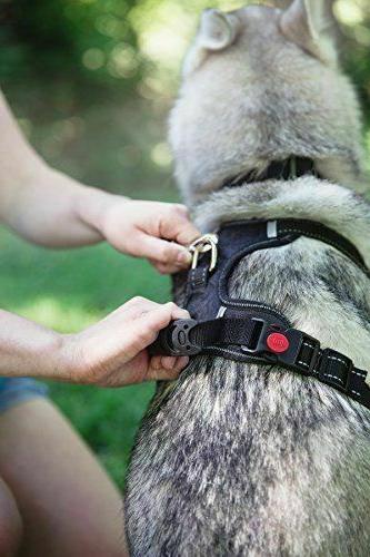 Adjustable Dog Pet QUALITY Harness W/ Handle, & Leash