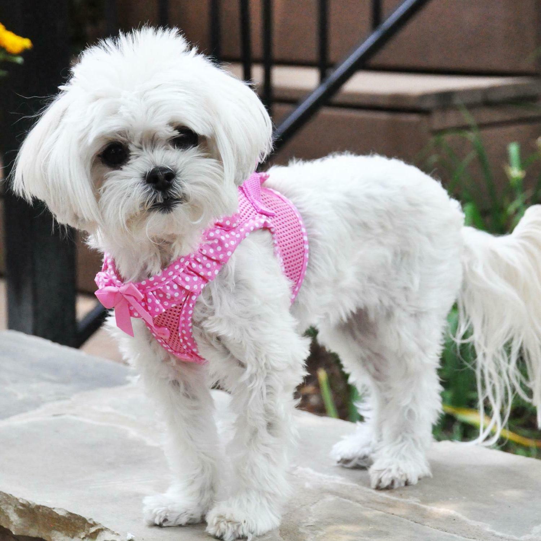 American Harness Polka Dot - Pink