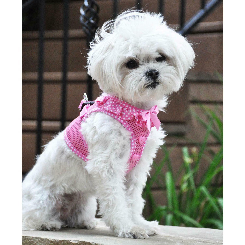 american river choke free dog harness polka