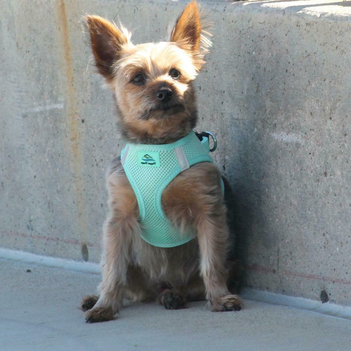 American Dog Harness Ultra Choke-Free Mesh All Solid