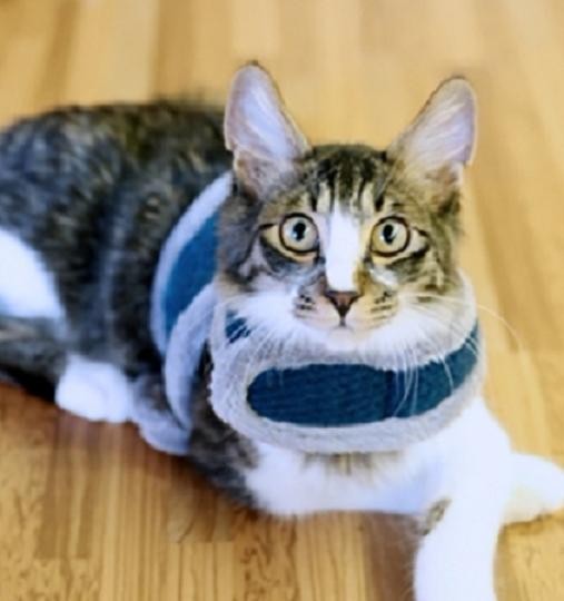 Puppia Cali Vest by Catspia