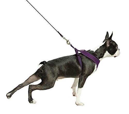 Gooby Freedom II, Choke Harness Dogs with Straps, Medium