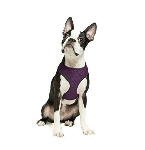 Gooby Freedom II, Choke Free Mesh Harness Small Dogs with Straps, Medium