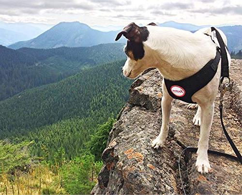 Xtreme Pet Harness