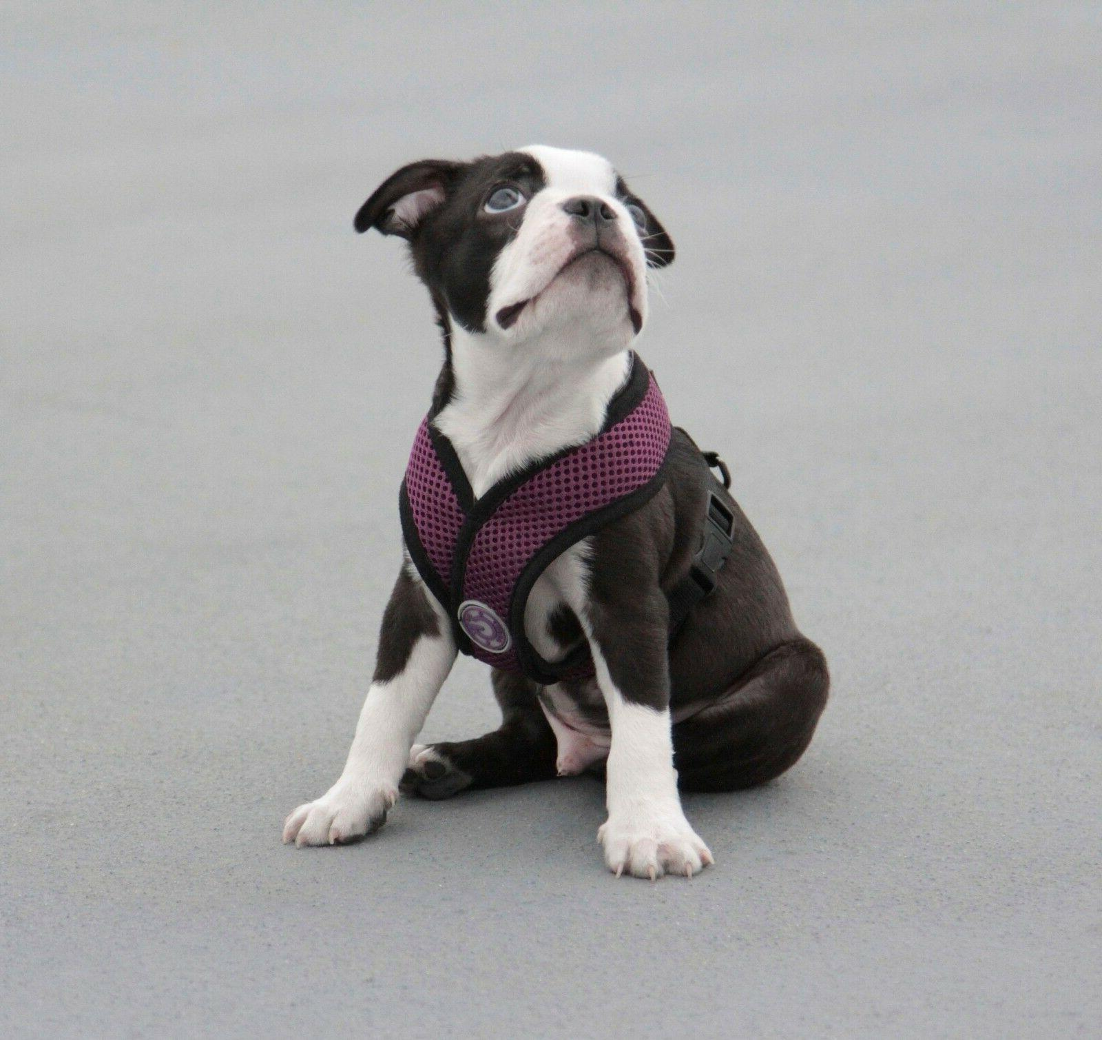 Gooby Comfort Breed Dog Harness Free - M Large XL