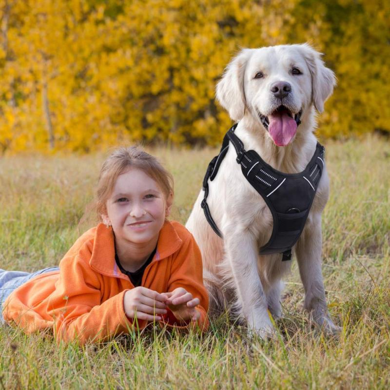 Rabbitgoo Dog Harness Pet Vest 3M Reflective