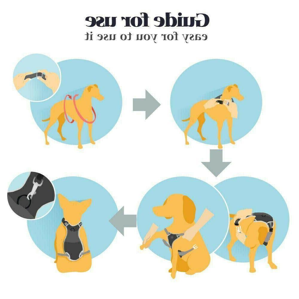 Rabbitgoo Dog Pet Collar