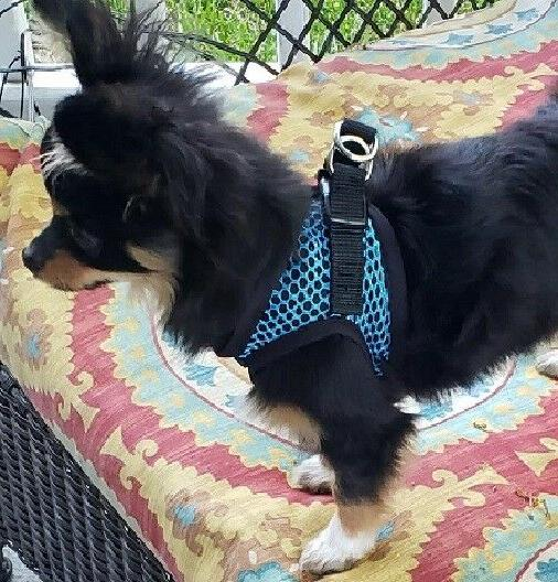 Dog Harness In Netted EZ Choke TURQUOISE BLUE