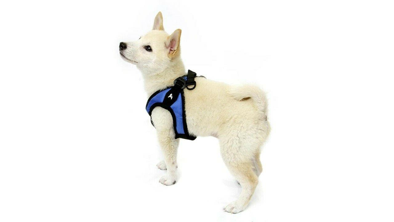 Gooby Easy Breed Dog XS S L