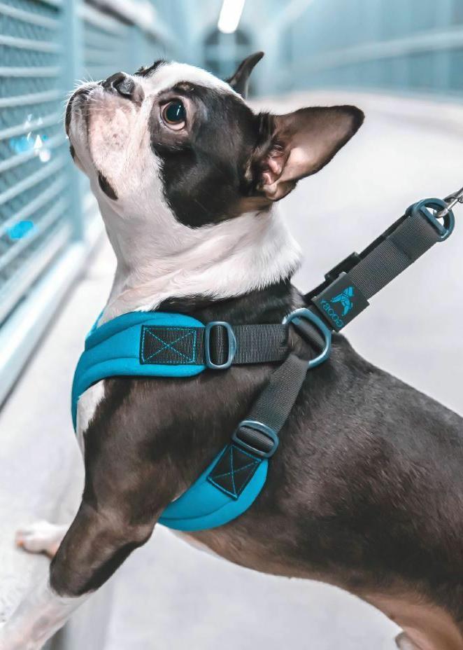 Gooby Escape Free Dog Harness Leash Small - L