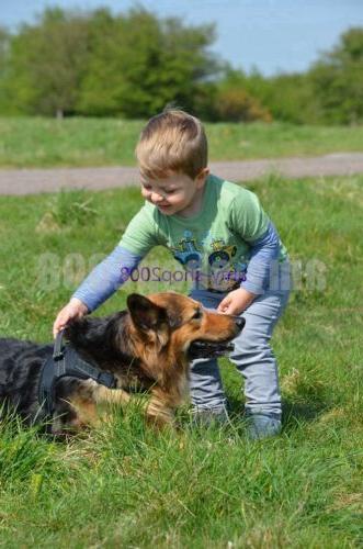 Large Leash Harness Adjustable Pet Control