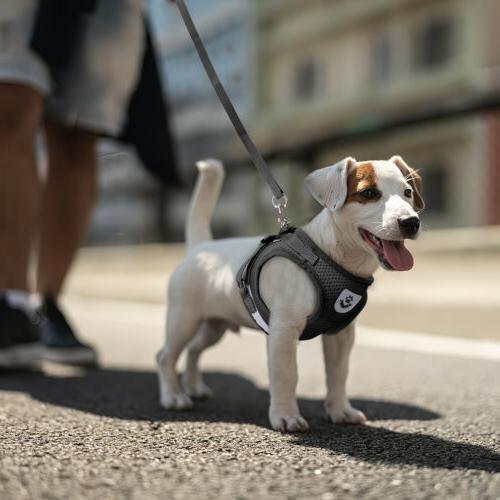 Leash + Pet Dog Breathable Vest Strap S