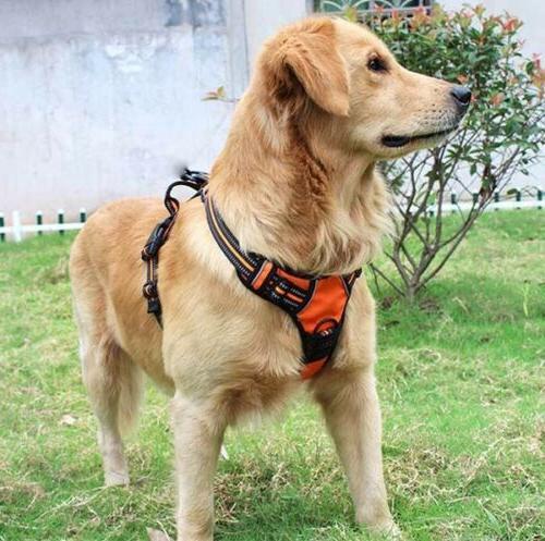 No-Pull Pet Harness Reflective Vest Strap