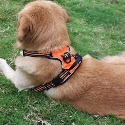 No-Pull Adj Harness Puppy Mesh Vest Walk Strap