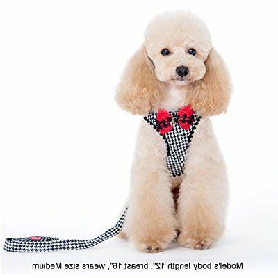 Alfie Pet by Petoga Couture - Shayne Step-in Harness and Lea