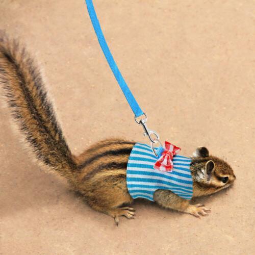 Pet Dog Squirrel