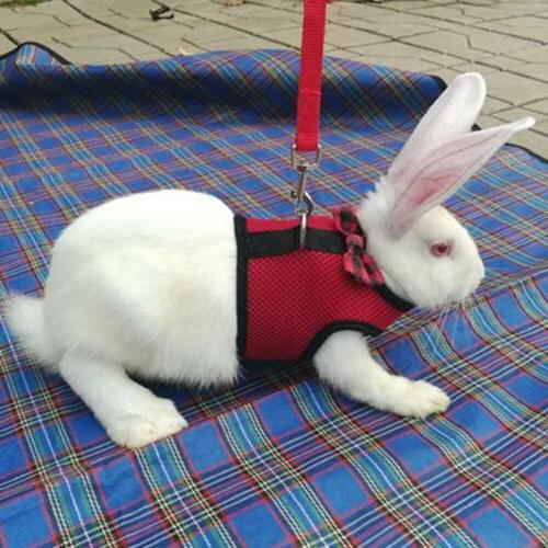 Pet Harness Leash Small Animal Vest Lead for