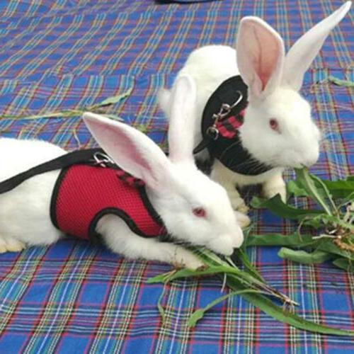 Pet Lead for Bunny