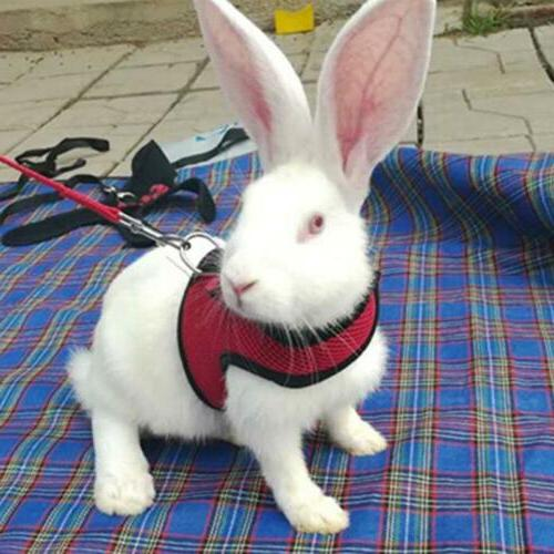 pet soft harness with leash small animal