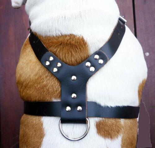 Spiked Dog Harness Dogs Boxer