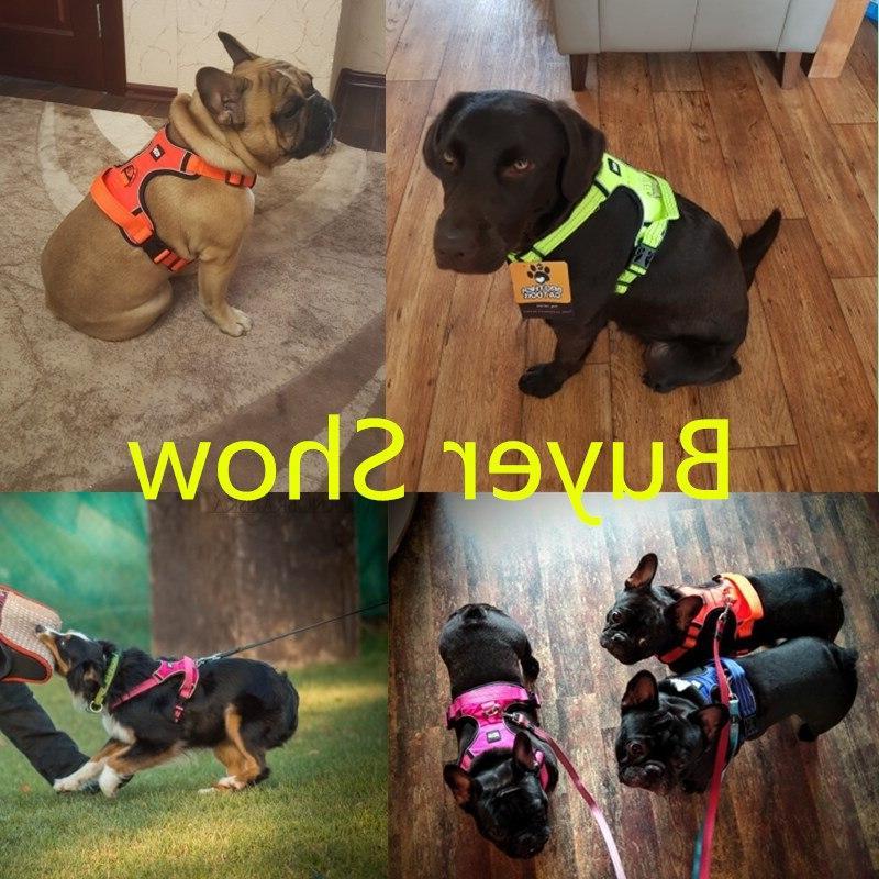 Strong Pet Dog For Dogs Training Medium Big Pitbull