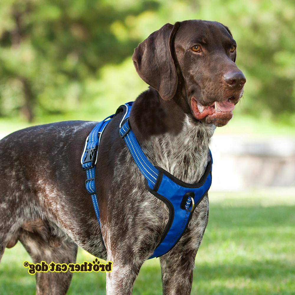 Strong Pet For Training Vest Medium Big Outdoor <font><b>Harness</b></font> Pitbull 8815
