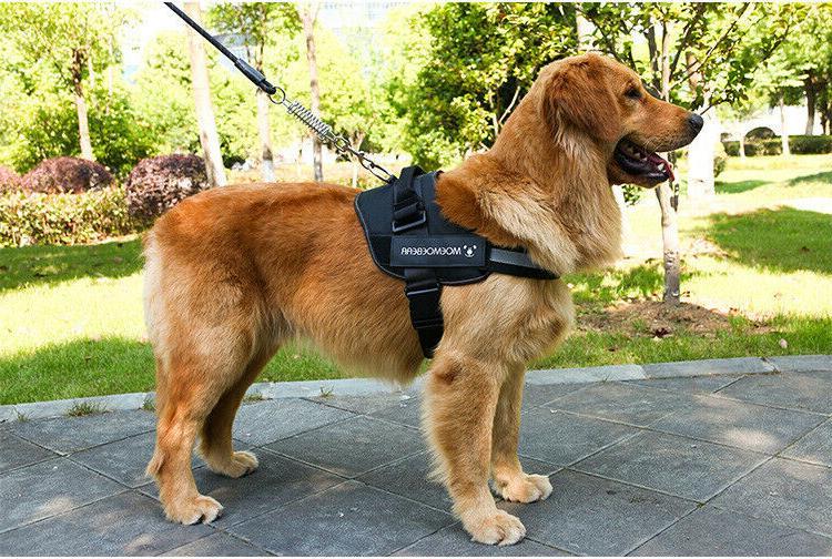 Harness Heavy Vest Collar
