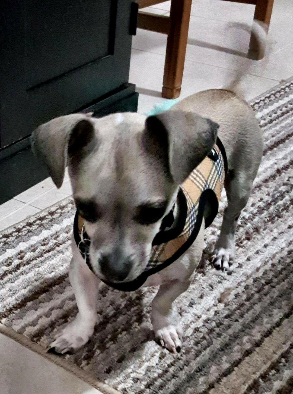 Tan Plaid Dog Wrap N 2 Free Bark