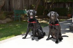 Softouch Concepts, Inc SENSE-ible® No-Pull Dog Harness Sens